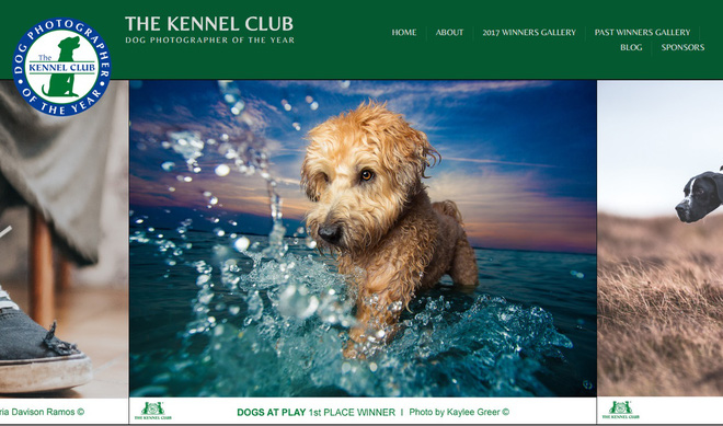 Dog Photographer of the Year do Kennel Club tổ chức