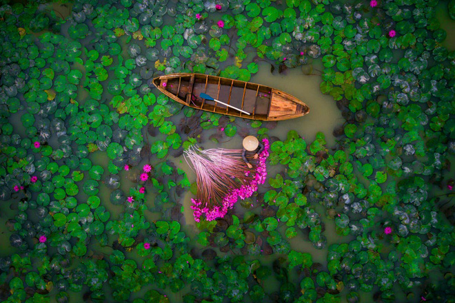 Vị trí thứ hai: tác giả helios1412, đây là bức ảnh chụp cảnh thu hoạch hoa súng ở Đồng bằng Sông Cửu Long, Việt Nam, cũng là tác phẩm về Việt Nam duy nhất trong bộ ảnh, vinh dự giành được giải nhì