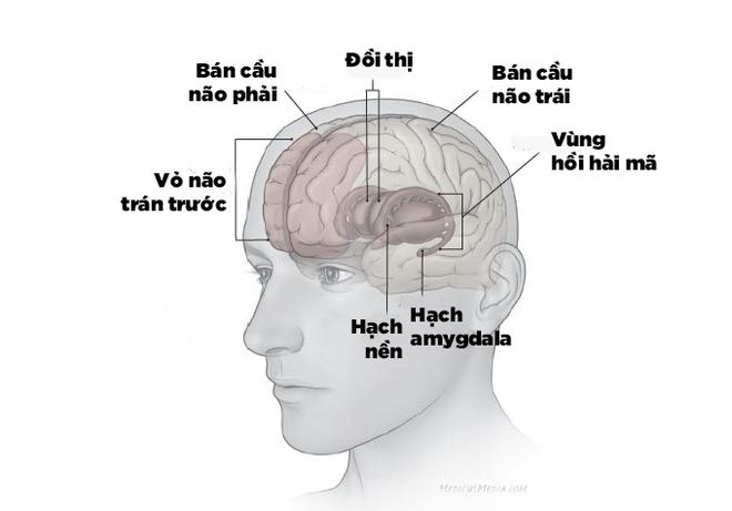 Các khu vực não bộ bị ảnh hưởng bởi trầm cảm