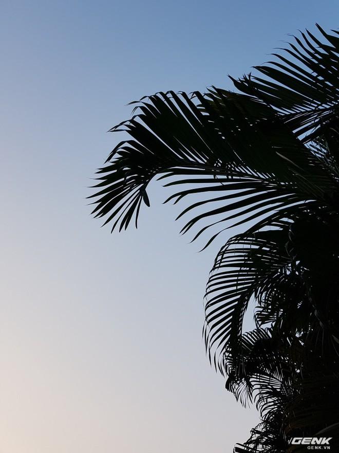 Một ví dụ điển hình cho sự tự nhiên này. Bầu trời không hề bị cháy, vẫn giữ được gam màu xanh chuyển cam của buổi chiều mà không cố gắng làm sáng phần tán lá lên.