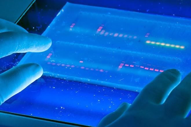 DNA tối có vai trò gì trong quá trình tiến hóa?