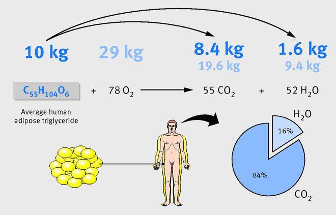 Hầu hết khối lượng chất béo được thở ra dưới dạng khí carbonic