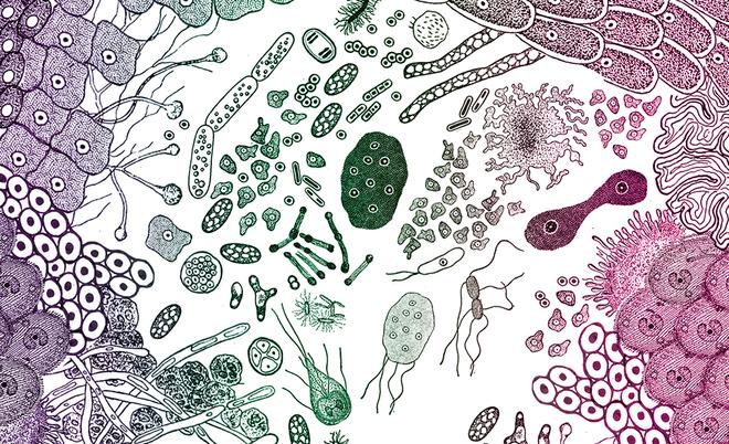 Tại sao các vi sinh vật nhỏ bé trong ruột có thể gây ảnh hưởng lớn đến sức khỏe của chúng ta?