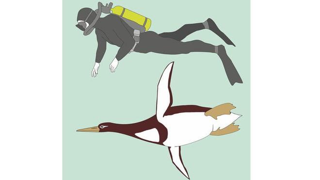 Phát hiện ra loài chim cánh cụt còn cao hơn chiều cao trung bình người Việt Nam, từng thống trị bờ biển New Zealand - Ảnh 1.