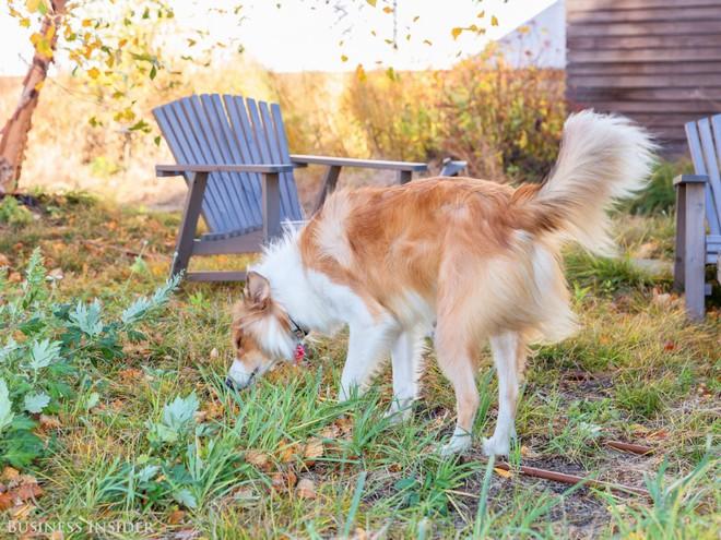 Hoặc họ có thể tận dụng khu vườn trên sân thượng để thư giãn với các hoạt động ngoài trời (chẳng hạn như dắt chó đi dạo).