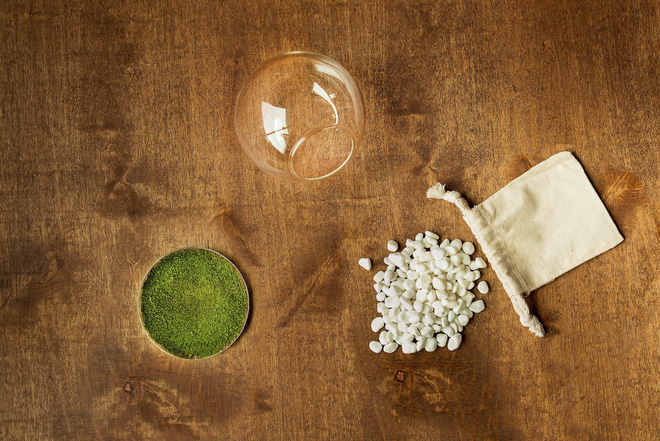 Rêu Orbella - loại rêu có mùi thơm biến đổi gien.