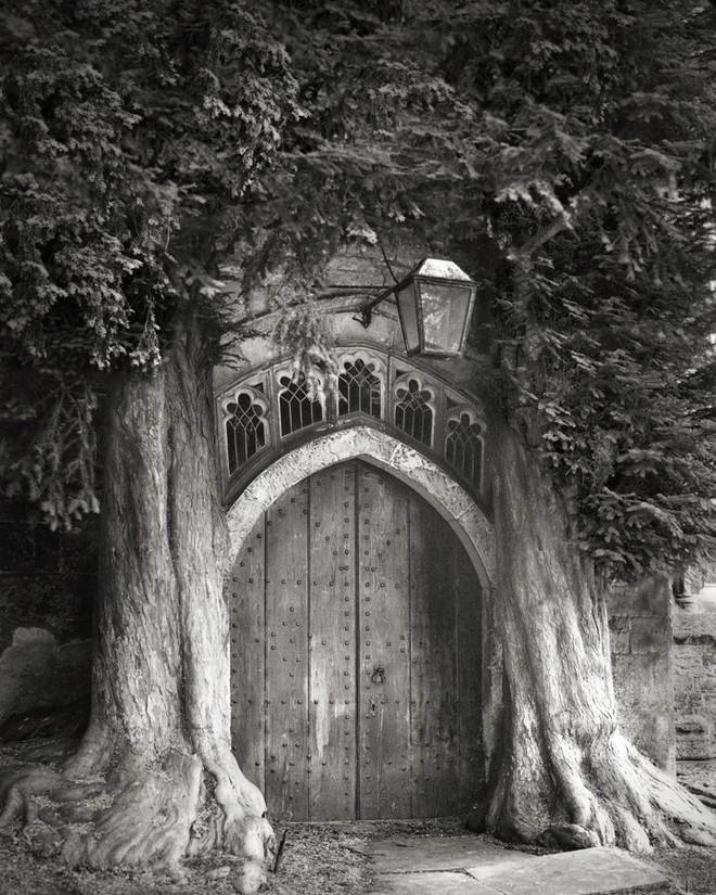 Trong ảnh là hai cây thủy tùng uy nghi trấn giữ trước ngôi chùa ở Stow-on-the-Wold, Gloucestershire. Chúng được cho là được trồng vào khoảng thế kỷ 18 và vẫn đứng vững, là lối vào của một nhà thờ ở tây nam nước Anh.
