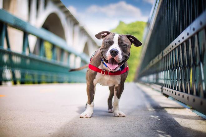 Chú chó Joshua thể hiện niềm vui sướng khi được nhận nuôi sau 8 tháng bị nhốt ở trạm cứu hộ chó