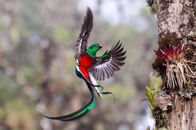 Nhiếp ảnh gia Tyohar Kastiel mỗi ngày đều đến khu rừng này trước bình minh, ngồi chờ cùng một nơi, mặc cùng một chiếc áo để những chú chim đi kiếm ăn cho con không bị giật mình.