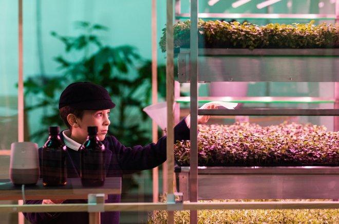 IKEA trình làng trang trại trong nhà, trồng rau nhanh hơn 3 lần so với thông thường - Ảnh 4.