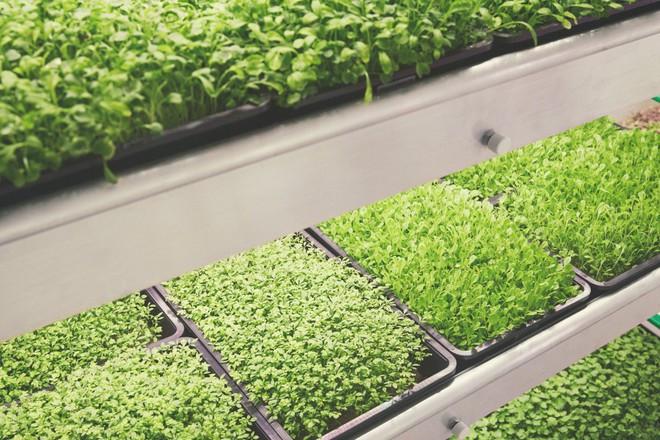 IKEA trình làng trang trại trong nhà, trồng rau nhanh hơn 3 lần so với thông thường - Ảnh 2.
