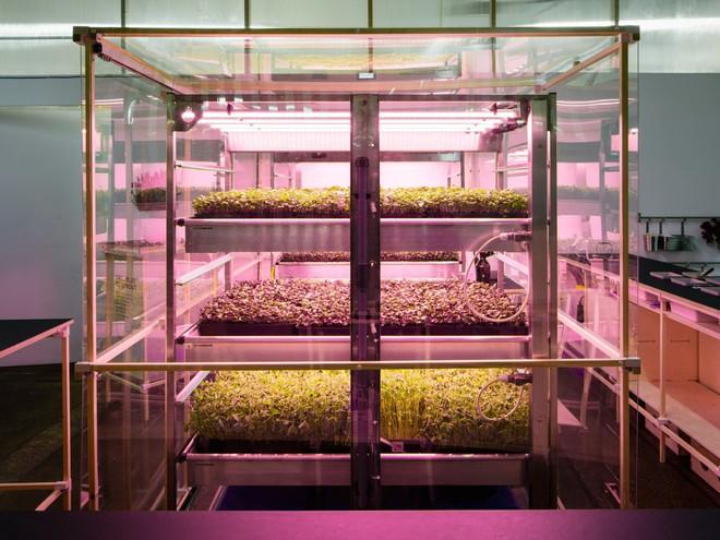 IKEA trình làng trang trại trong nhà, trồng rau nhanh hơn 3 lần so với thông thường - Ảnh 1.