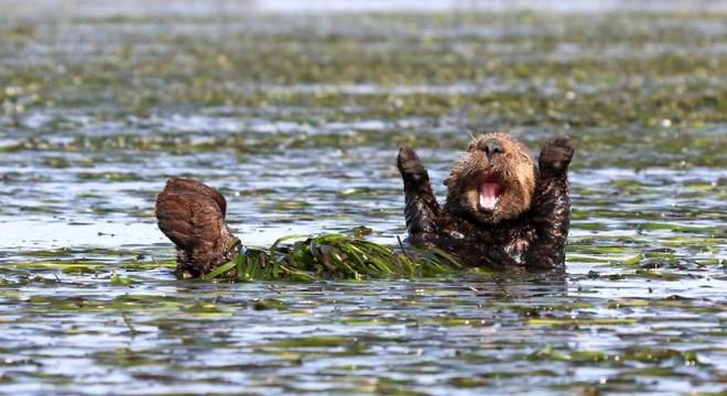 [Ảnh] Những khoảnh khắc hài hước nhất năm của động vật hoang dã trong Comedy Wildlife Photography Awards 2017 - Ảnh 5.