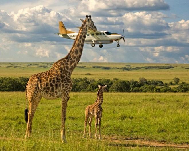 [Ảnh] Những khoảnh khắc hài hước nhất năm của động vật hoang dã trong Comedy Wildlife Photography Awards 2017 - Ảnh 17.