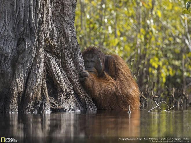 [Ảnh] National Geographic công bố kết quả cuộc thi Nhiếp ảnh gia Thiên nhiên 2017 - Ảnh 11.