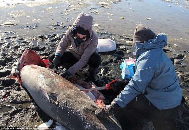 Chuyện lạ: Giờ nước Mỹ đang lạnh đến mức đến cá mập cũng phải chết cóng - Ảnh 2.