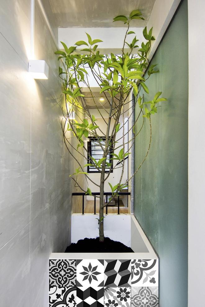 Cây xanh được đặt tại nhiều vị trí thích hợp trong ngôi nhà, giúp không gian sống trở nên tươi mát hơn