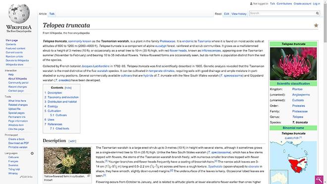 Wikipedia toàn chữ là chữ, nhưng thông tin lại được tìm thấy dễ dàng.