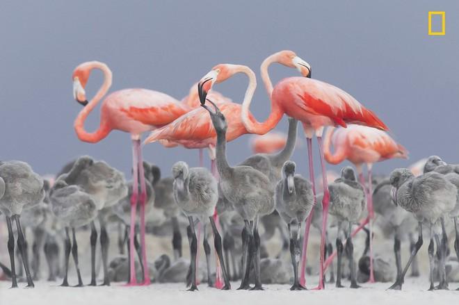 [Ảnh] National Geographic công bố kết quả cuộc thi Nhiếp ảnh gia Thiên nhiên 2017 - Ảnh 5.