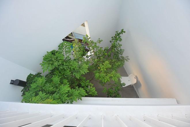 Ngôi nhà 42m2 kỳ lạ ở Sài Gòn: Bên ngoài tưởng kín như hũ nút, bên trong thoáng mát rộng mở thênh thang - Ảnh 6.
