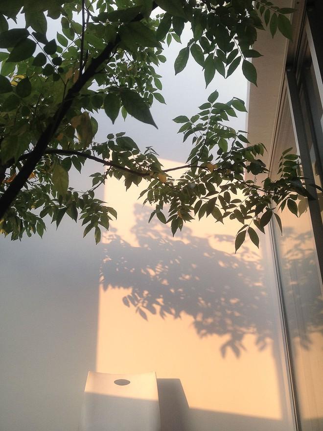 Ngôi nhà 42m2 kỳ lạ ở Sài Gòn: Bên ngoài tưởng kín như hũ nút, bên trong thoáng mát rộng mở thênh thang - Ảnh 8.