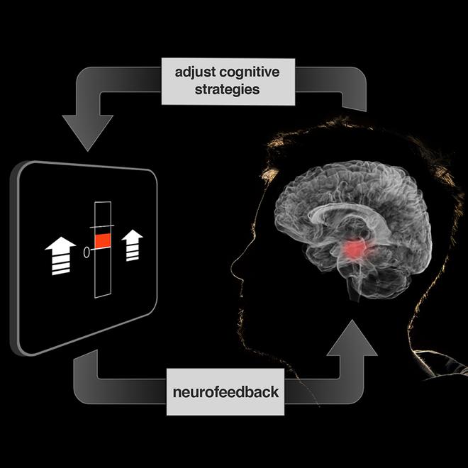 Một hệ thống fMRI thời gian thực, nơi người tham gia có thể nhìn thấy những gì đang diễn ra trong não bộ mình