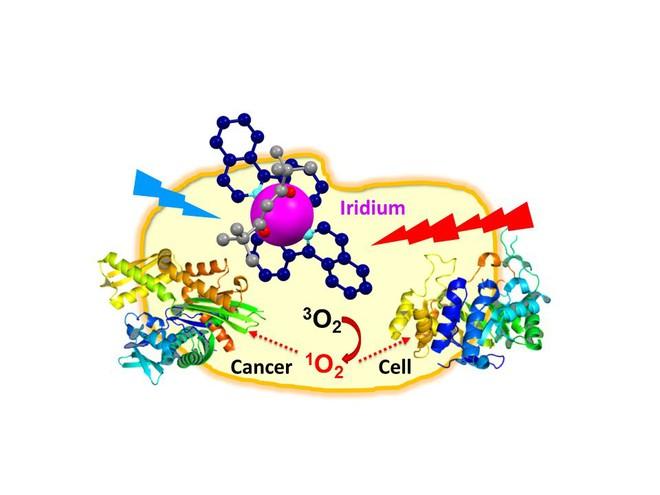 Iridium biến phân tử oxy thành dạng oxy nguyên tử, gây độc tính cực kỳ mạnh.