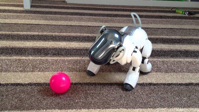 Sony muốn bắt đầu lại với lĩnh vực robot bằng việc tái sinh chú chó Aibo