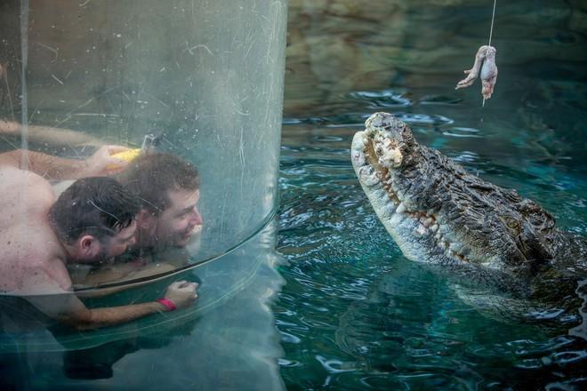 Chiếc lồng tử thần là phương thức cho khách du lịch chiêm ngưỡng cách cá sấu ăn thịt.