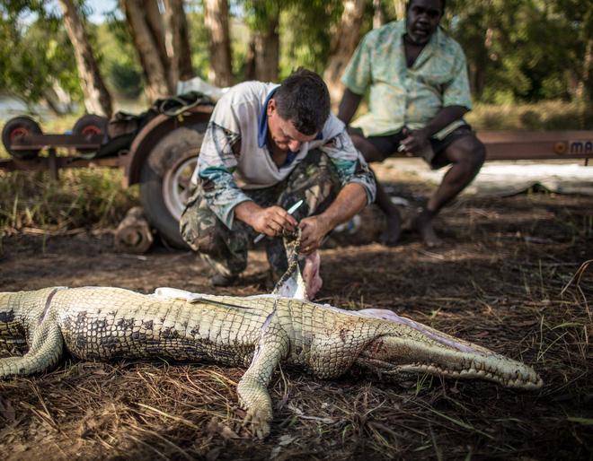 Aaron Rodwell lột da cá sấu. Công việc kiếm tiền của anh chỉ xoay quanh những con cá sấu này mà thôi.