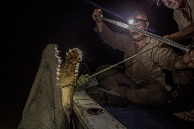 Roger Matthews (trái) và Aaron Rodwell (phải) đang săn cá sấu.