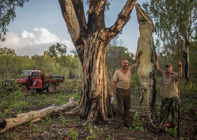 Roger Matthews (trái) và Aaron Rodwell (phải) đang tạo dáng bên cạnh con cá sấu dài 4 mét rưỡi, nặng 680 kg.