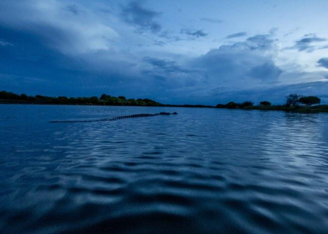 Đây là con cá sấu Fang - Răng Nanh ngụ tại sông Mary, người ta đặt tên nó như vậy là vì nó có một cái răng nanh chọc xuyên qua mõm trên của nó. Fang dài 4,8 mét.