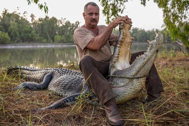 Ông Roger Matthews ngồi trên một con cá sấu 60 năm tuổi, dài 4,8 mét.
