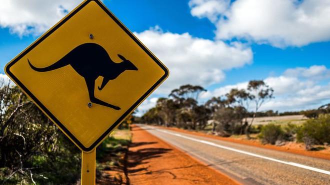 Kangaroo trở thành khắc tinh của xe tự lái