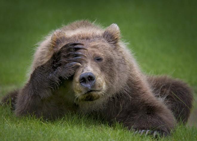 Cười xả tress hiệu quả khi bạn biết động vật cũng có lúc đáng yêu thế này - Ảnh 1.