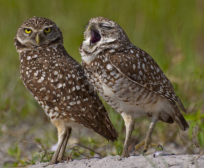 Cười xả tress hiệu quả khi bạn biết động vật cũng có lúc đáng yêu thế này - Ảnh 4.