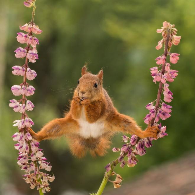 Cười xả tress hiệu quả khi bạn biết động vật cũng có lúc đáng yêu thế này - Ảnh 6.