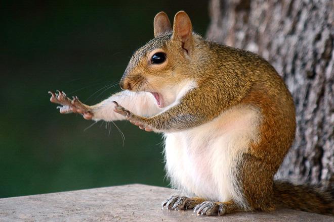 Cười xả tress hiệu quả khi bạn biết động vật cũng có lúc đáng yêu thế này - Ảnh 16.
