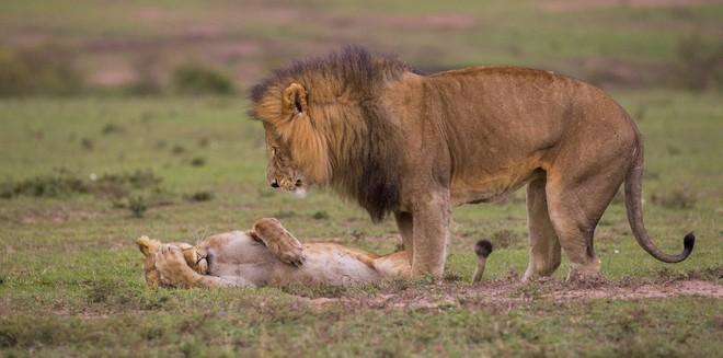 Cười xả tress hiệu quả khi bạn biết động vật cũng có lúc đáng yêu thế này - Ảnh 11.