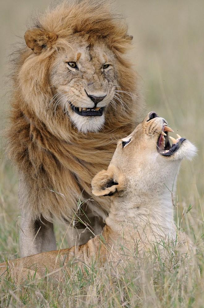 Cười xả tress hiệu quả khi bạn biết động vật cũng có lúc đáng yêu thế này - Ảnh 13.