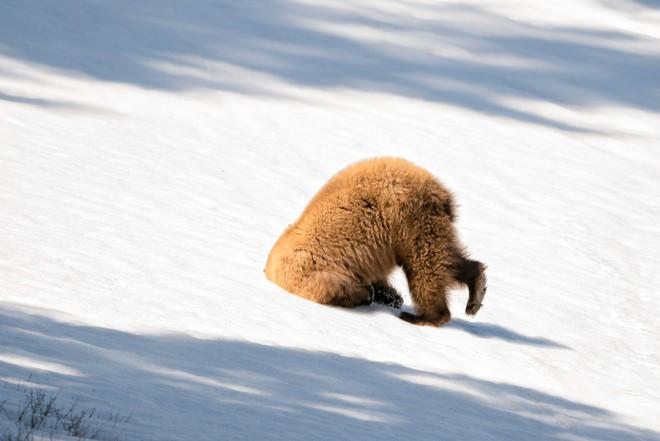 Cười xả tress hiệu quả khi bạn biết động vật cũng có lúc đáng yêu thế này - Ảnh 14.