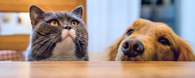 """Khoa học chứng minh: Trí tuệ của chó chỉ thuộc loại bình thường"""" trong thế giới động vật, dốt hơn cả mèo - Ảnh 3."""