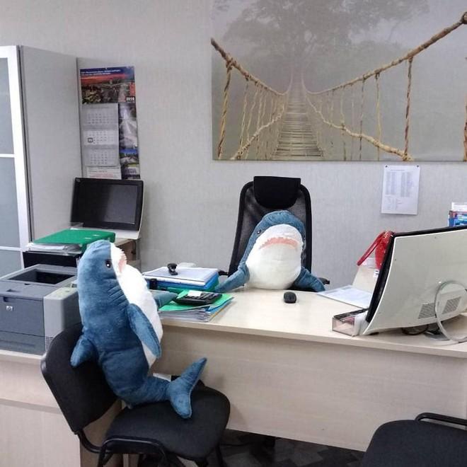 Gặp gỡ Blaha - Chú cá mập nhồi bông đến từ IKEA đang làm náo loạn mạng xã hội thế giới - Ảnh 7.