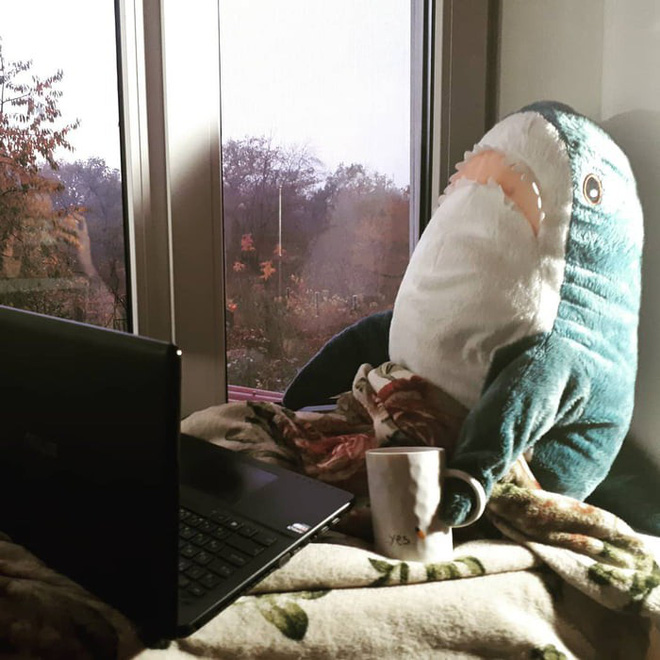 Gặp gỡ Blaha - Chú cá mập nhồi bông đến từ IKEA đang làm náo loạn mạng xã hội thế giới - Ảnh 8.