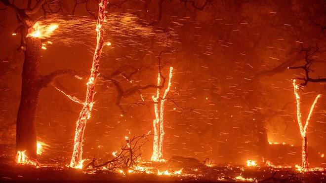 Cháy rừng ở California: Mỗi giây thiêu rụi cả một sân bóng - tại sao lại lan nhanh khủng khiếp đến thế? - Ảnh 3.