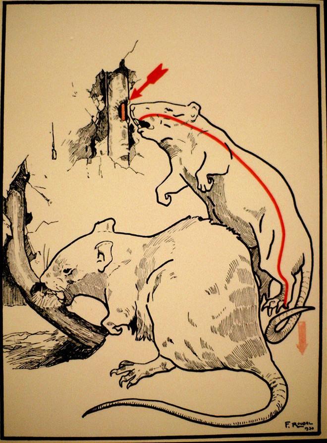 12 cảnh báo chết người khi dùng điện từ năm 1931 cho thấy thế giới đã thay đổi nhiều hơn ta tưởng - Ảnh 8.