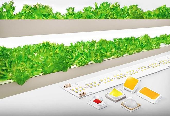 Samsung giới thiệu giải pháp đèn LED chiếu sáng mới dùng cho nông nghiệp sạch - Ảnh 1.