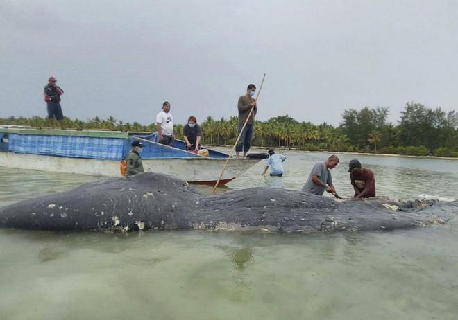 Tìm thấy 1000 mảnh nhựa và 2 đôi dép tông trong bụng cá nhà táng chết dạt vào bờ biển Indonesia - Ảnh 2.
