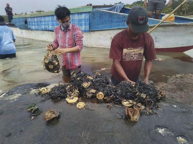 Tìm thấy 1000 mảnh nhựa và 2 đôi dép tông trong bụng cá nhà táng chết dạt vào bờ biển Indonesia - Ảnh 3.